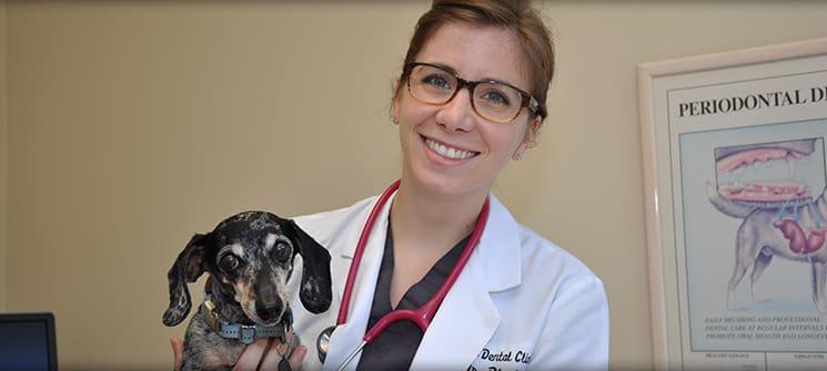 Preferred Veterinary Dental Care in Portland OR