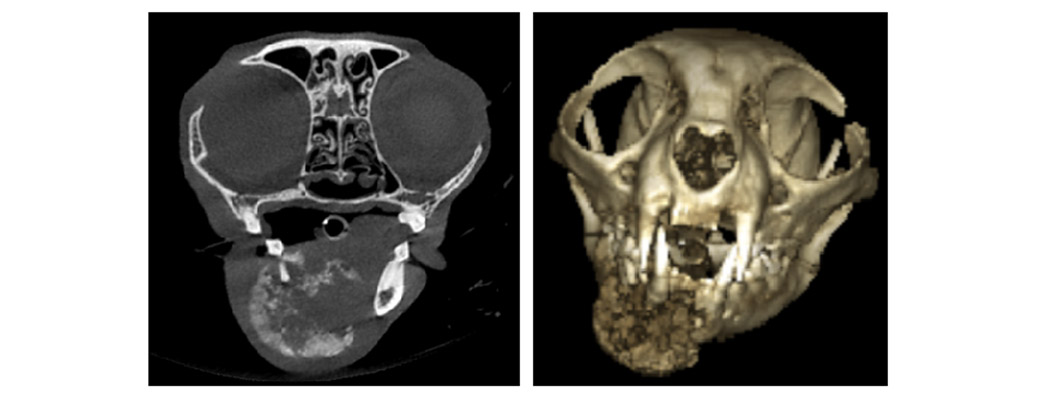 Animal Dental Clinic Uses Computed Tomography Ct Scans